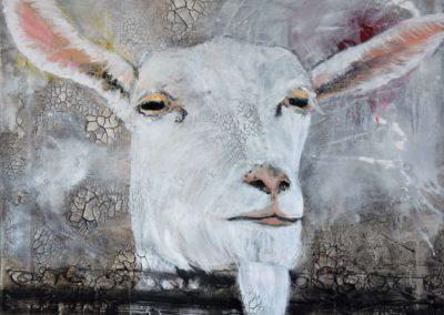 Weisse Ziege  |  Mischtechnik auf Leinwand |  60x60